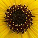 Southern Idaho Sunflower by Nick Boren