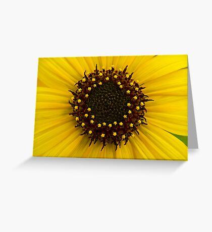 Southern Idaho Sunflower Greeting Card