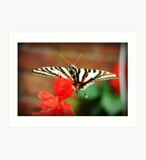 Zebra Butterfly Art Print