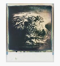 mammal Photographic Print