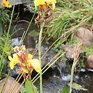 The pond by leesm19