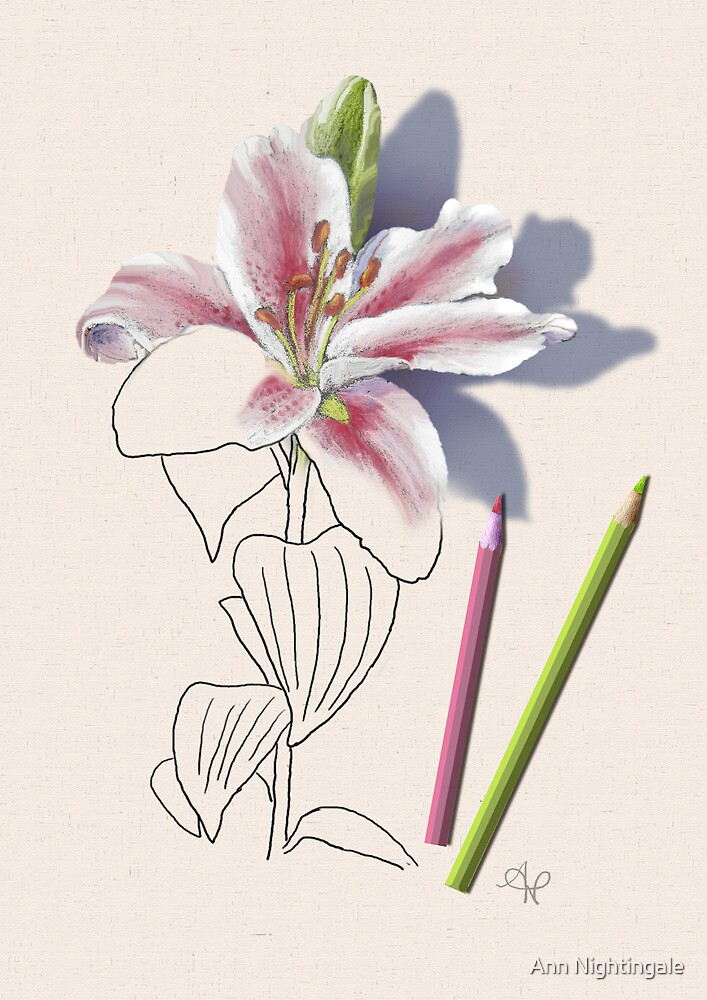 Emerging Lily by Ann Nightingale