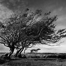 Windblown by Lorraine Parramore