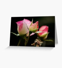 Life of a Rose Greeting Card