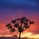 Wildflower Night by David Alexander Elder