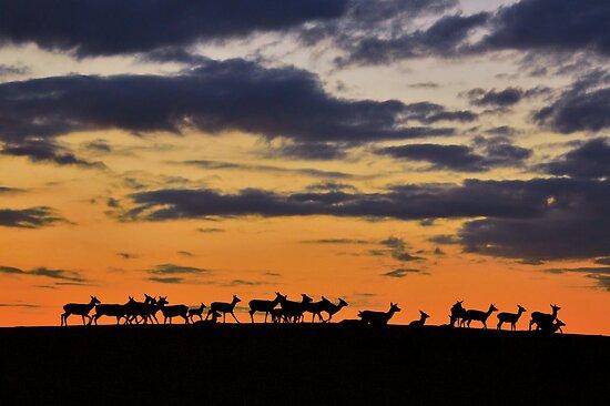 Deer at Dusk by David Alexander Elder