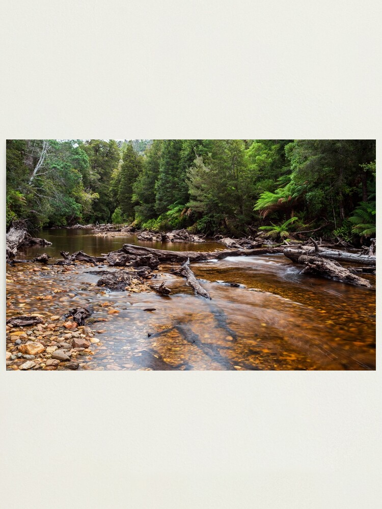 Alternate view of Styx River - Tasmania Photographic Print