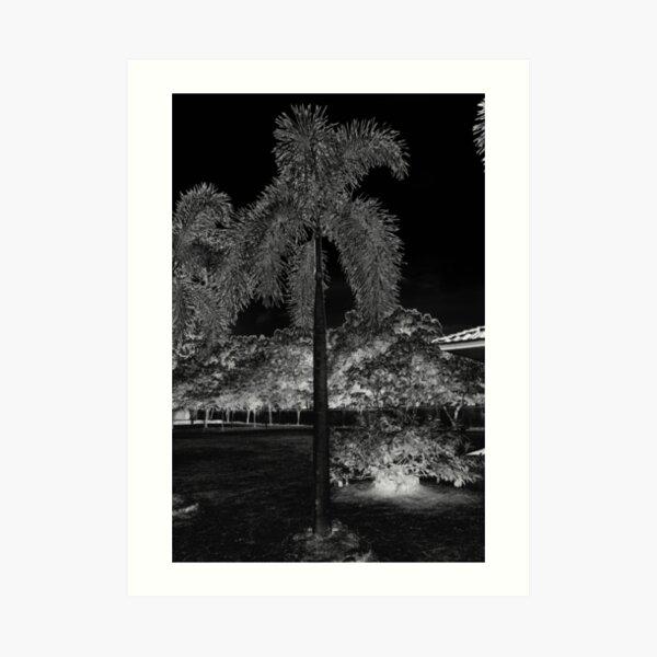 Star Moon Tree Art Print
