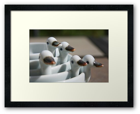 Ducks in a row ..... by LynnEngland