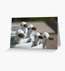Ducks in a row ..... Greeting Card