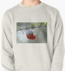 Red headed weaver bird Pullover
