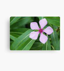 Pentagon Five Petal Purple Flower Canvas Print