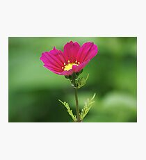 Red Flower Bokeh Photographic Print