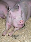 Adorable Pig by Barberelli