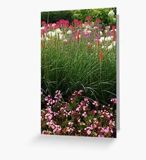 Red Poker Garden Flower Bed Greeting Card