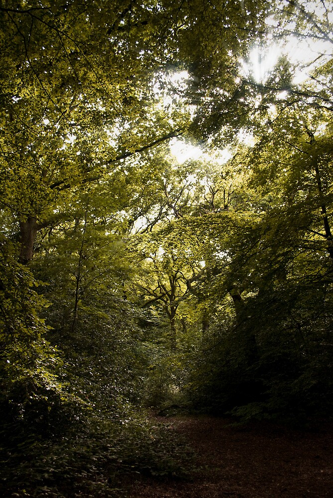If You Went Down To The Woods Today by Cosmo Hill-Miers
