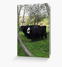 cows all lined up in the pasture Greeting Card