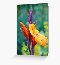 It's NOT a Bird of Paradise (Flower) Greeting Card