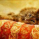 Chloe reclines by Lynn Starner