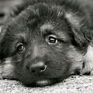 Puppy Dog Eyes- (black and white) by Lou Wilson