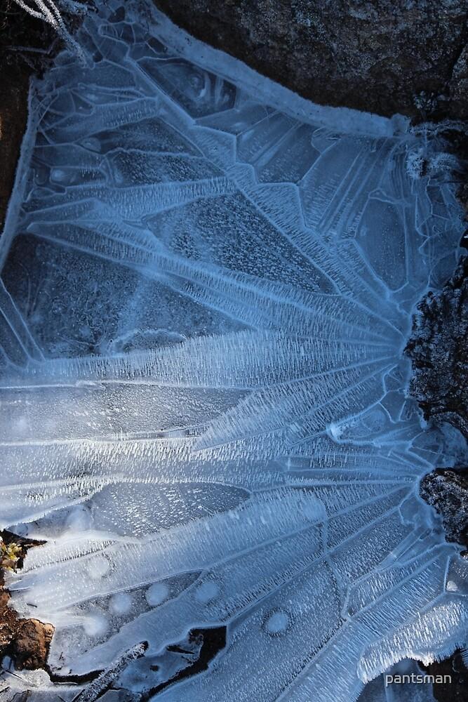 Iced wonderland by pantsman