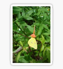 Cloudless Sulphur butterfly in Mahogany Vine Sticker