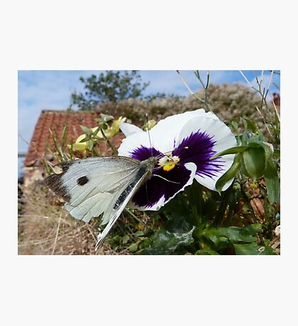 Cabbage White Photographic Print