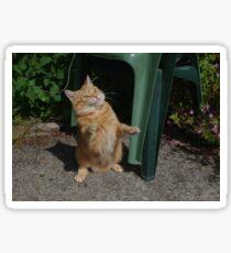 Playful cat Sticker