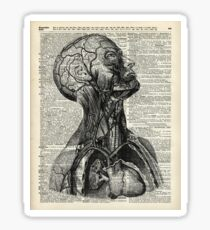 Medical Human Anatomy Illustration Over Old Book Page Sticker