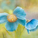 Blue Beauties by Marilyn Cornwell