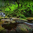 McCord Creek II by Tula Top