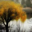 The fog rolls in... © by Dawn Becker