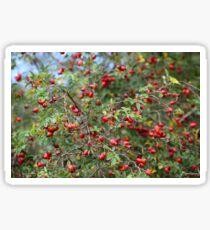 Red Dog Rose Fruits Sticker
