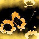 Wildflower Dream by Mechelep
