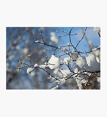 Snowy branches, Otley Chevin Photographic Print