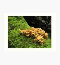 Fungi and moss Art Print
