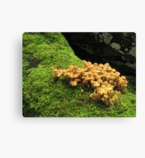 Fungi and moss Canvas Print