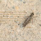 Grasshopper by DreamCatcher/ Kyrah