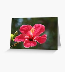 nature is great Greeting Card