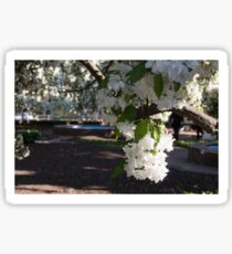 Blossoms in the park Sticker