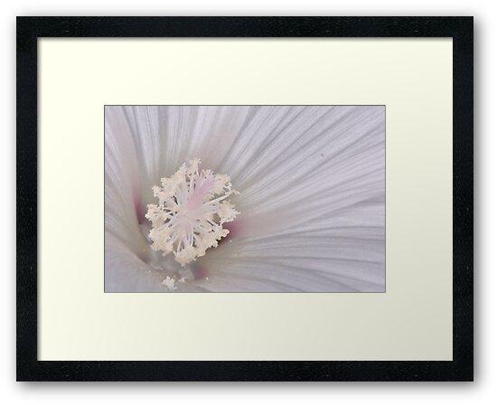 Crystal Flower by Paul  Eden