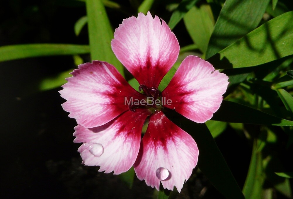 Pretty In Pink by MaeBelle