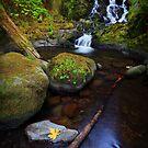 McCord Creek III by Tula Top