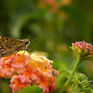 Moth by vasu