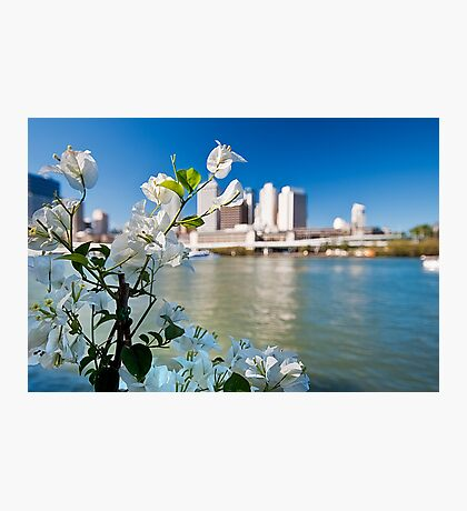 Southbank Bougainvillea along the Brisbane River,  Photographic Print