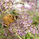 Butterfly and Violet flowers by vasu