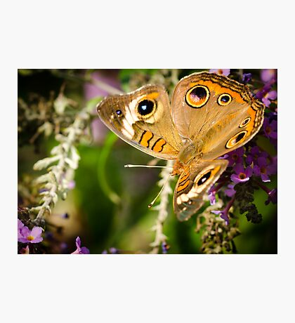 Butterfly with wings unfolded Photographic Print