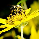 Bee with Yellow Pollen by vasu