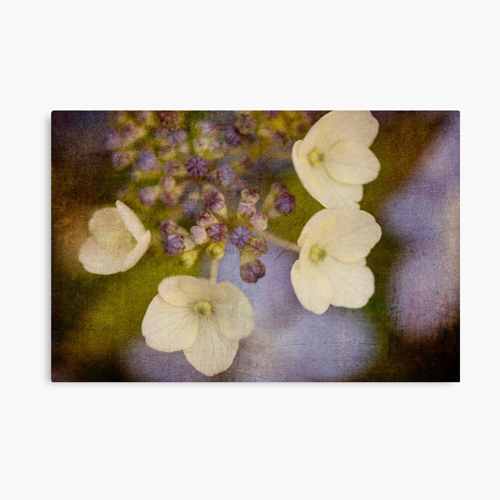 violet hues Canvas Print