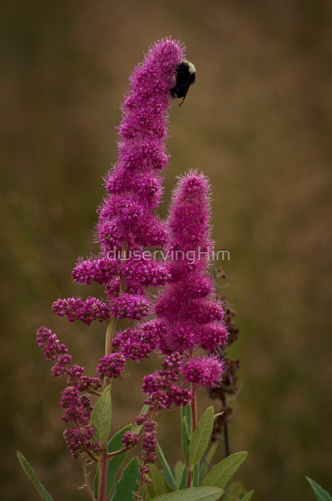 Bumble Bee by dwservingHim